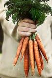 Cenouras frescas Imagens de Stock Royalty Free