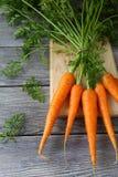 Cenouras frescas com caudas Fotografia de Stock