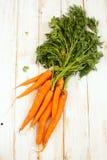 Cenouras frescas com partes superiores verdes Fotografia de Stock Royalty Free