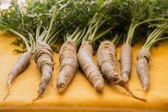 Cenouras frescas do terra-alinhado acima com os verdes unidos Foto de Stock Royalty Free