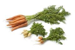 Cenouras frescas grandes e de bebê Fotos de Stock Royalty Free