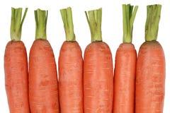 Cenouras frescas, isoladas em um fundo branco Imagem de Stock Royalty Free