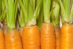 Cenouras frescas novas Foto de Stock
