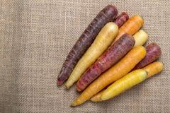 Cenouras Multi-coloridas frescas na serapilheira Fotos de Stock Royalty Free