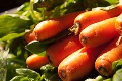 Cenouras na estação Fotografia de Stock