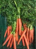 Cenouras orgânicas com material verde Imagens de Stock Royalty Free