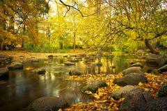 Cenário amarelo do parque no outono Imagens de Stock Royalty Free