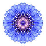 Centáurea azul Mandala Flower Kaleidoscope Isolated no branco Fotos de Stock Royalty Free