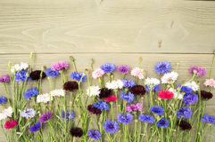Centáureas coloridas no fundo de madeira Foto de Stock
