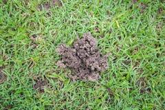 Centów earthworms i organicznie sprawy gruzy Zdjęcia Royalty Free