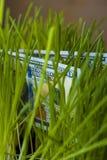 Cent billets d'un dollar dans l'herbe verte Photographie stock