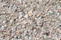 Centaines de coquilles Image libre de droits