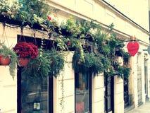 Centar, день, Валентайн, любовь, цветки, красный, красивые, цветок, украшенный магазин, стоковые изображения