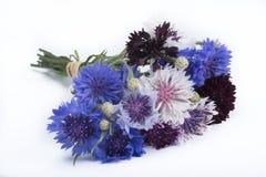 Centaurea bouquet Stock Images