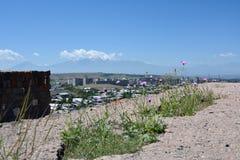 Centaury w okwitnięciu w szczątkach Erebuni, Armenia Fotografia Royalty Free