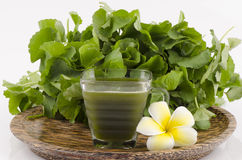 Centella asiatica, Asiatic Pennywort, (Centella asiatica (Linn.) Urban.) Herbal Drink. Has medicinal properties Stock Images