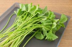 Centella Asiatica or Gotu Kola on A Tray Royalty Free Stock Photo