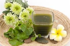 Centella asiatica, Pennywort asiático, (Centella asiatica (Linn.) Urbano.) Bebida erval. Fotografia de Stock Royalty Free