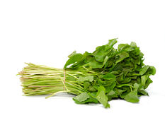 Centella asiatica vegetables Stock Photos
