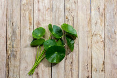 Centella asiatica on wood Royalty Free Stock Images