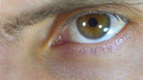 Centelleos de ojo humano masculinos Primer almacen de metraje de vídeo