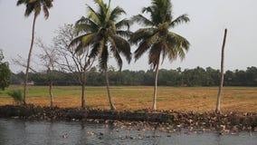 Centenares de patos en el agua en la India almacen de video