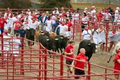Centenares funcionados con con los toros en Georgia Event Fotografía de archivo libre de regalías