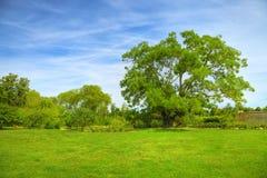 Centenary tree over meadows Stock Photos