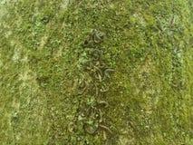 Centenas de lagartas na árvore Imagem de Stock