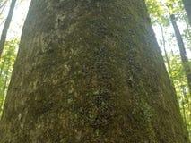 Centenas de lagartas na árvore Fotos de Stock Royalty Free