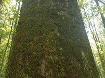 Centenas de lagartas na árvore Imagem de Stock Royalty Free