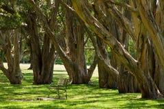 centennial парк Сидней стоковые фотографии rf