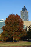 Centennial Tree - Atlanta, Georgia. Skyscrapers in Atlanta, Georgia during Fall foliage season, as seen from Centennial Olympic Park. The tree in the foreground stock images
