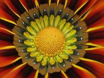 center blomma Royaltyfri Bild
