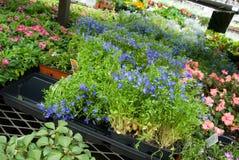 center blommaträdgårdmarknad Royaltyfri Bild
