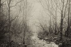 Dirt road in the wild forest, foggy day, black and white antique photo, Crimea, Russia royalty free stock image