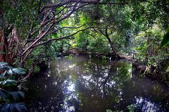 Center lagoon in forest. Center lagoon in little palaces forest Stock Photos