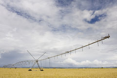 A center modern pivot irrigation system Royalty Free Stock Photo