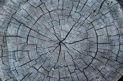 Center of an old tree Stock Photography