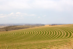 Center pivot irrigated farm. Showing a sloping field with alternating rows of planting with fallow to allow the rotation of the wheeled trusses carrying the Stock Photography