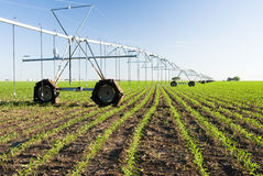 Center pivot irrigation system. A center pivot irrigation system in a corn field Stock Photos