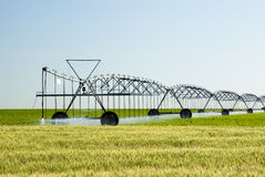 Center pivot irrigation system. A center pivot irrigation system in a corn fieldwith a wheat field in the foreground Royalty Free Stock Photography