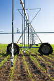 Center pivot irrigation system. A center pivot irrigation system in a corn field Royalty Free Stock Image