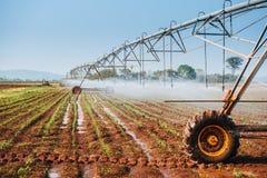 Center pivot sprinkler system watering corn shoots Stock Image