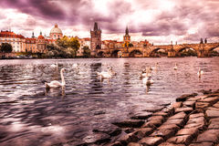 The center of Prague, river and white swans Royalty Free Stock Images