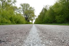 Center of the road. Center of the straight asphalt road among the trees Stock Photo