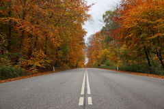 Center stripes on road in autumn forest with beautiful colours Royalty Free Stock Photos