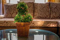 Center table basket pot plant in the living room. With a feeling of earth colored style inside the living room royalty free stock images