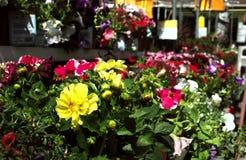 center trädgård Arkivfoto