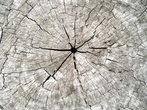 Centered cracked trunk Stock Photography